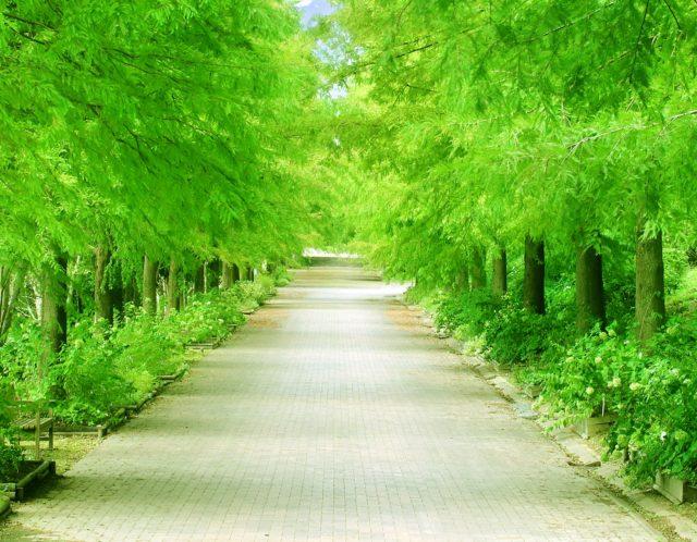 都内とは思えないほど豊かな自然!赤羽自然観察公園はどんなところ?