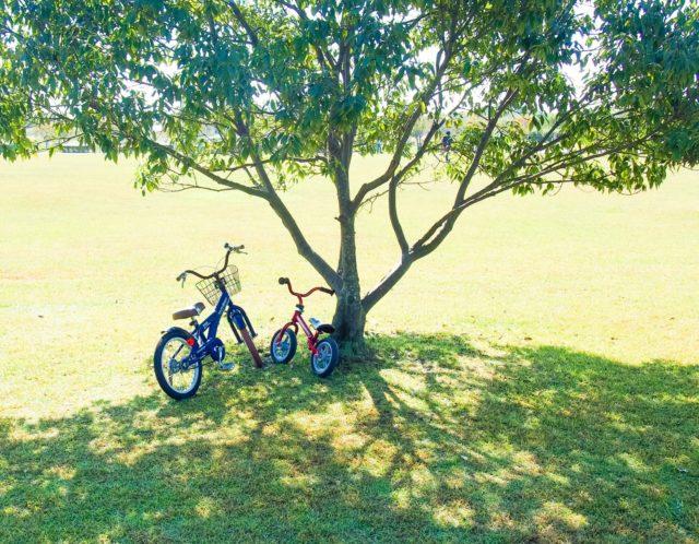 板橋区平和公園とは?のんびりした時間が楽しめる人気スポットをご紹介!